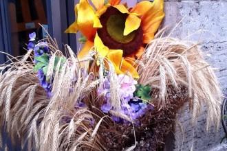 Ars ludica attivita recreative e culturali for Mostre mercato fiori 2017